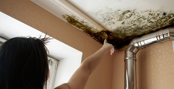 Mold Remediation Tucson